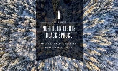 All About Northern Lights Black Spruce