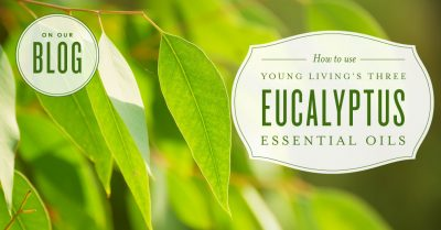 How to use Eucalyptus essential oils
