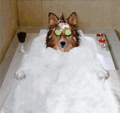 This dog knows how to take a bath!!
