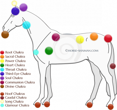 Your horses Chakras Part 2