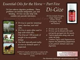 digize for the horse