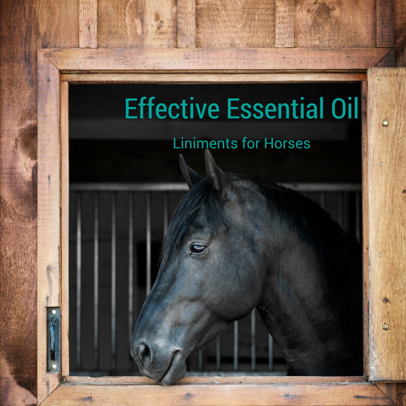 How to make a great liniment you and your horse will love!